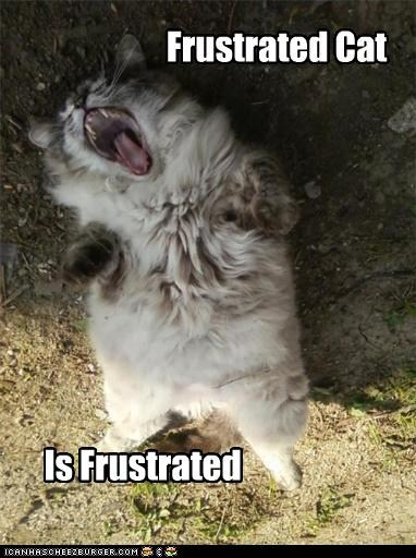frustrated-cat