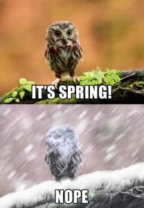 not spring