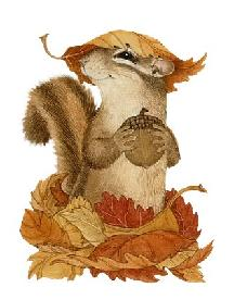 fallsquirrel2