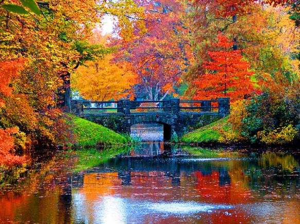 autumn in Boston Marie Jamieson